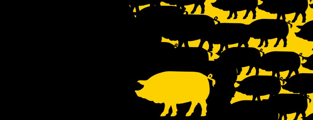 poiroux-cochons-bannière
