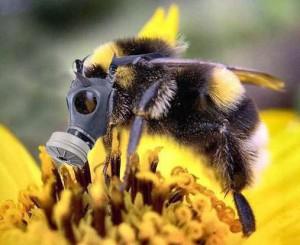 ob_d64e44_abeille-en-danger