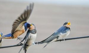 838_bird-3089799_960_720